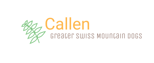 Callen Greater Swiss Mountain Dogs